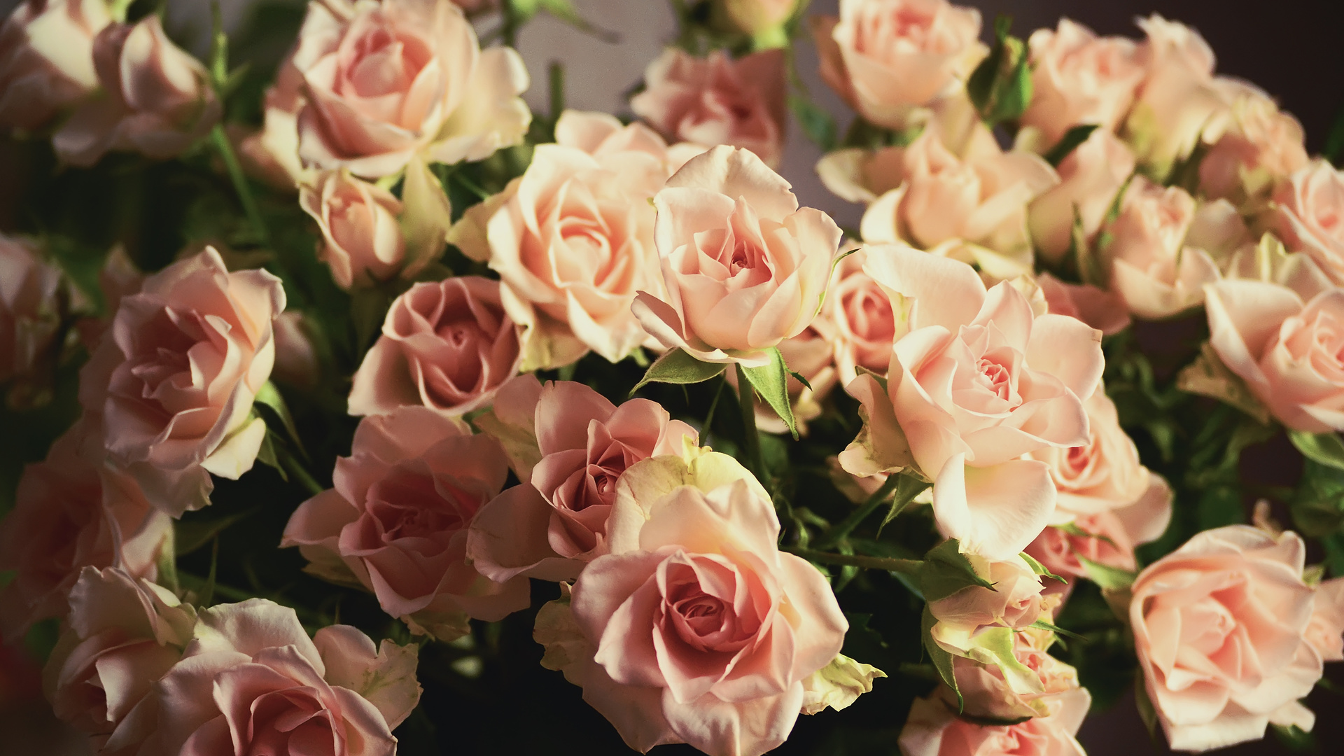 государственном нежные маленькие розы фото полные мужчины, испытывающие