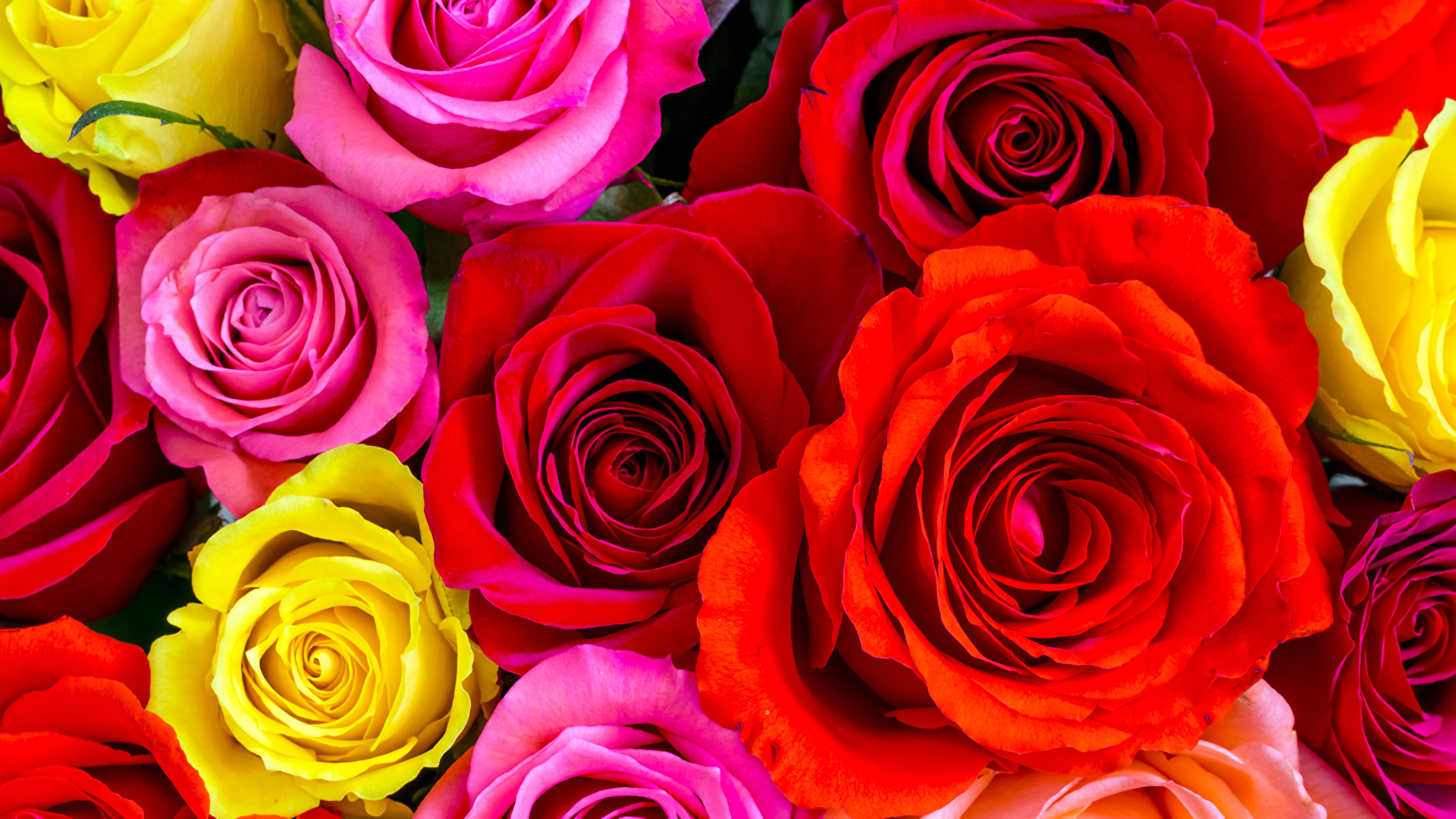 Картинка картинка с цветами