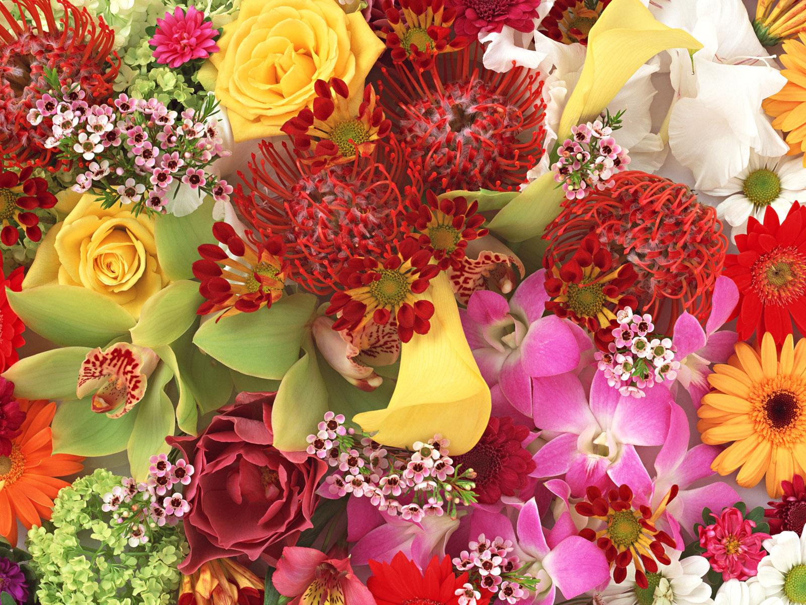 Самые красивые цветы мира фото букеты