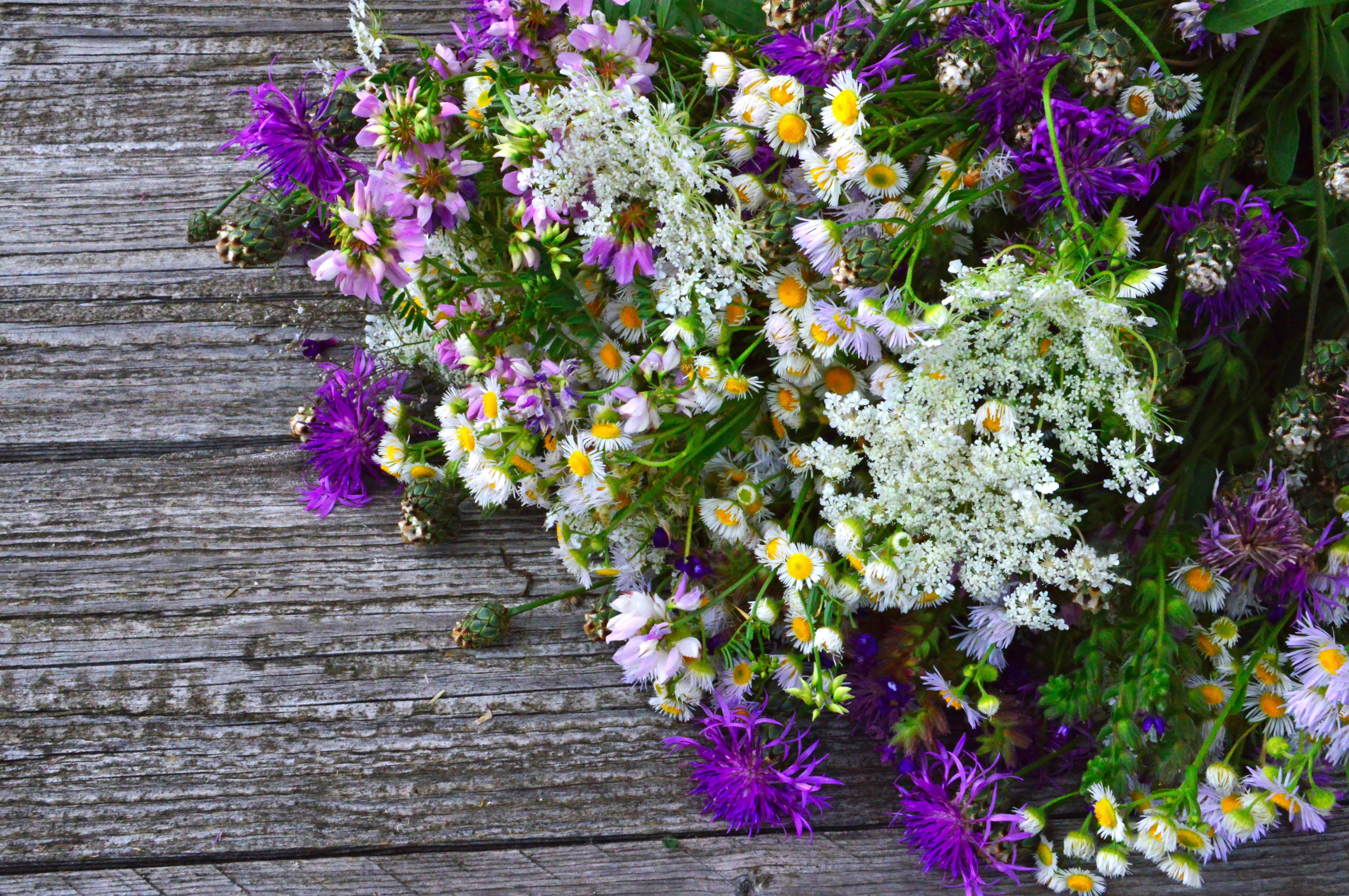 охапка полевых цветов картинки красивые разновидность