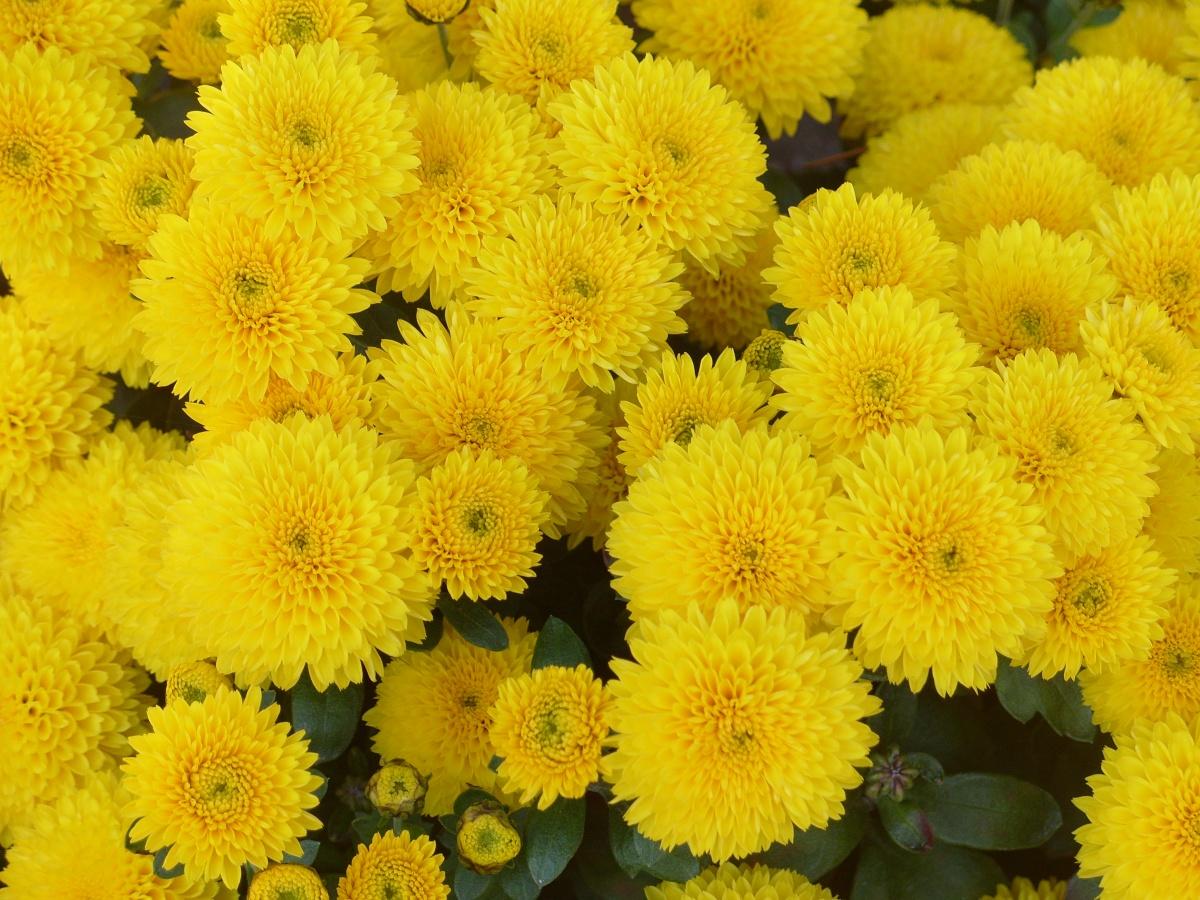 Желтая тройка в карбоне фото