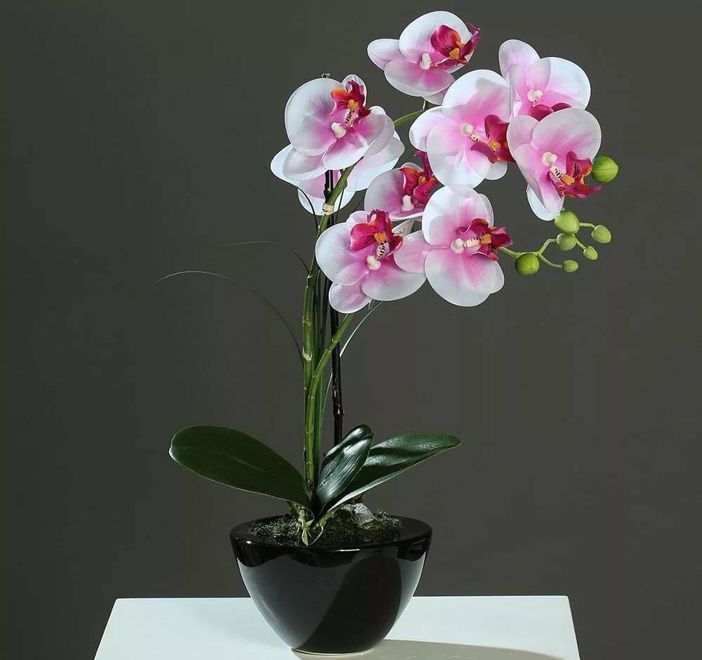картинки комнатная орхидея образом