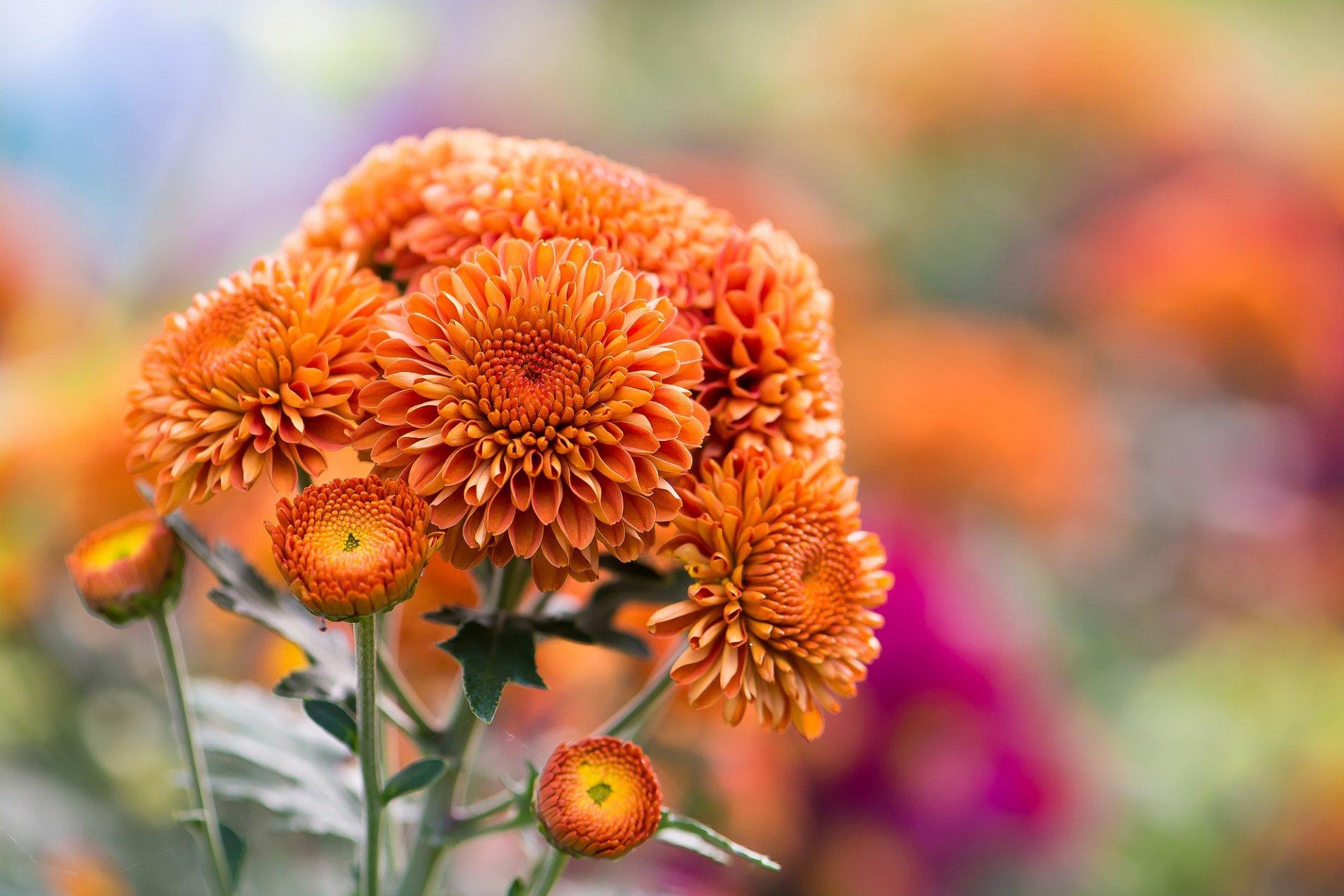 собрались фотографии осенних цветов вас открытки