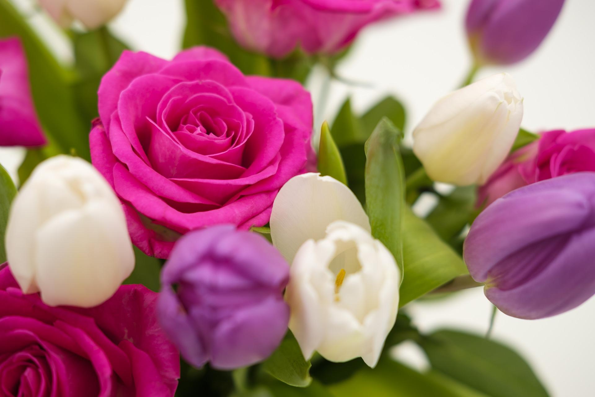 Красивые открытки розы и тюльпаны, красивые