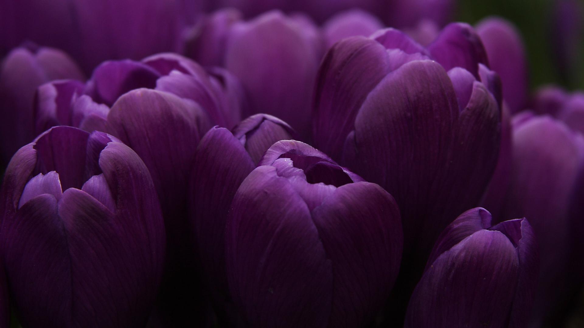 Картинки высокого разрешения фиолетовые