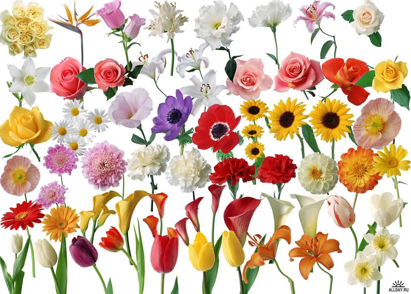 Разные цветы на одной картинке