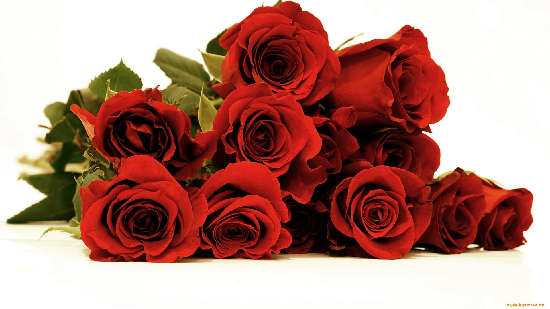 букет роз лежит фото фото