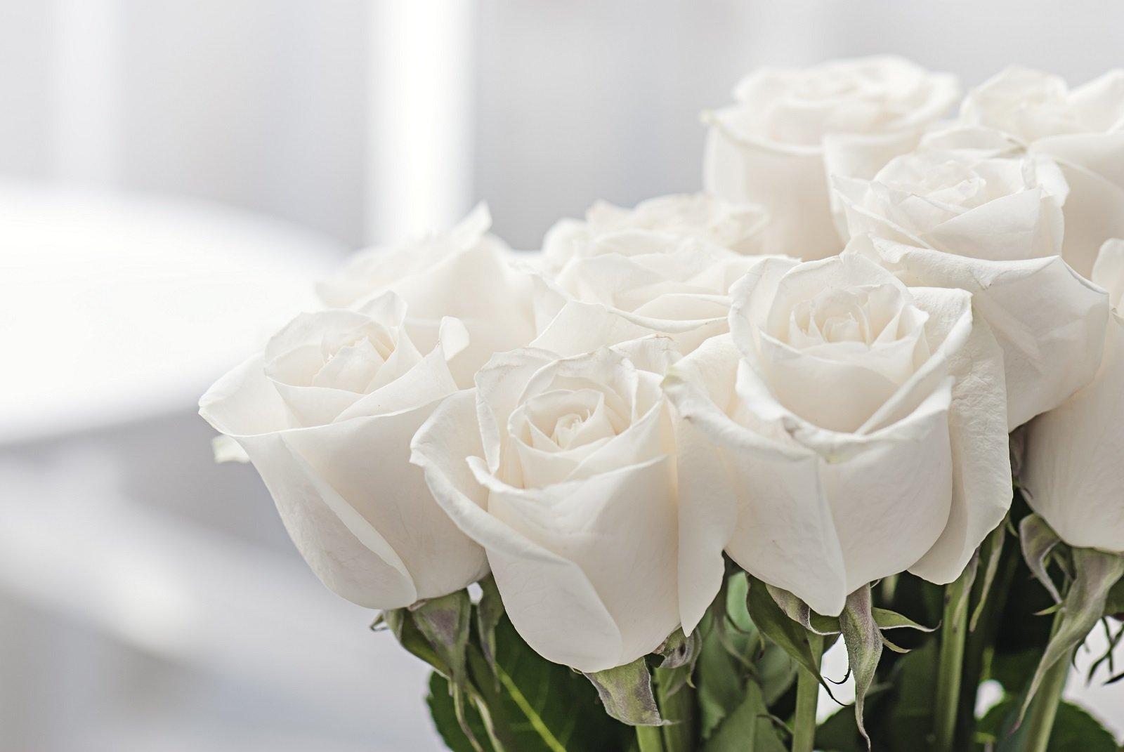 Картинка с красивыми белыми розами
