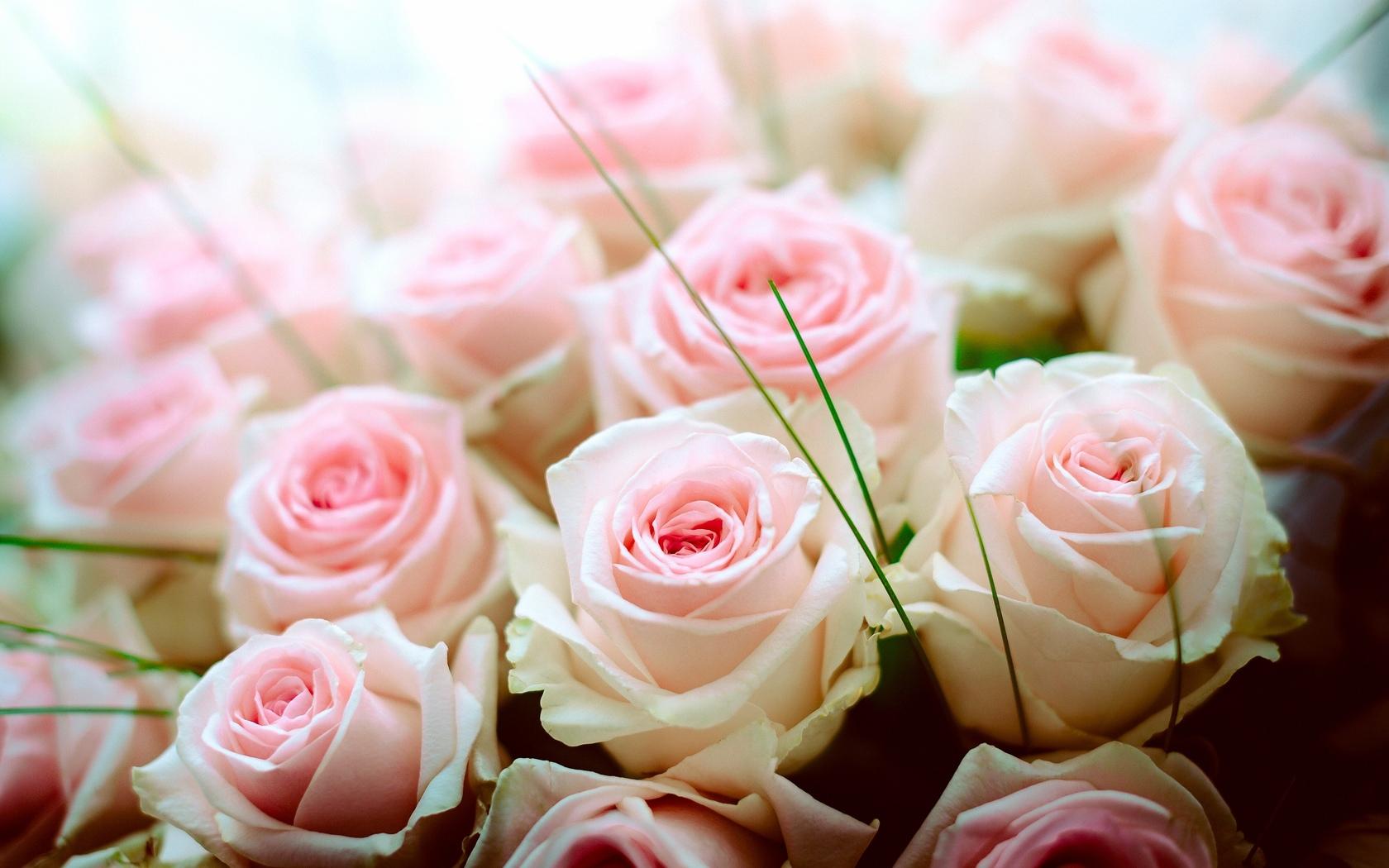 понимаете, красивые картинки букеты розы нежные череда