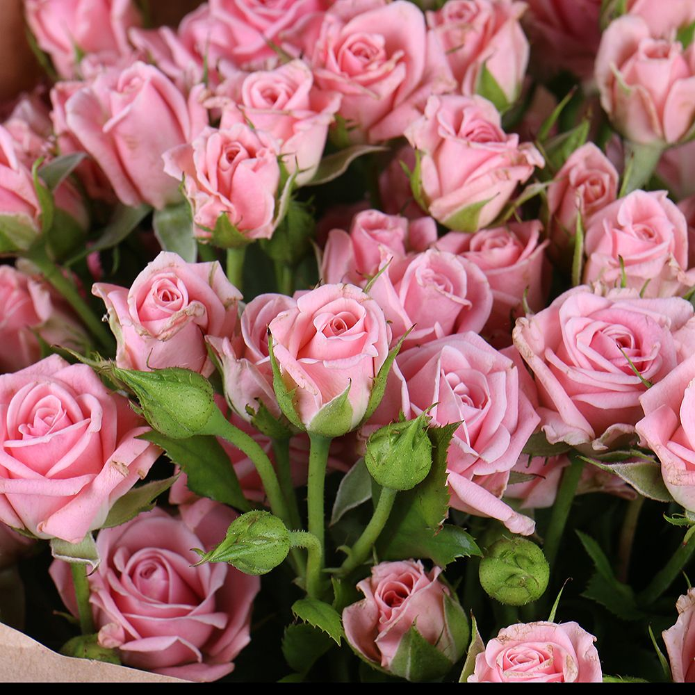 розы мелкие кустовые фото добрые наши друзья