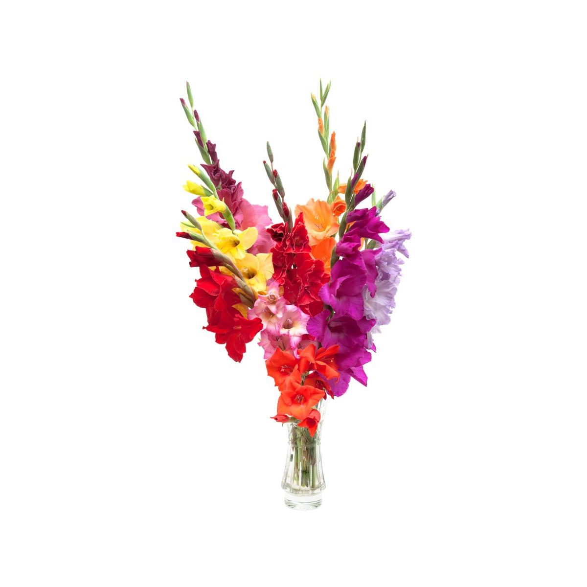 Красивые букеты из гладиолусов на 1 сентября, цветов через