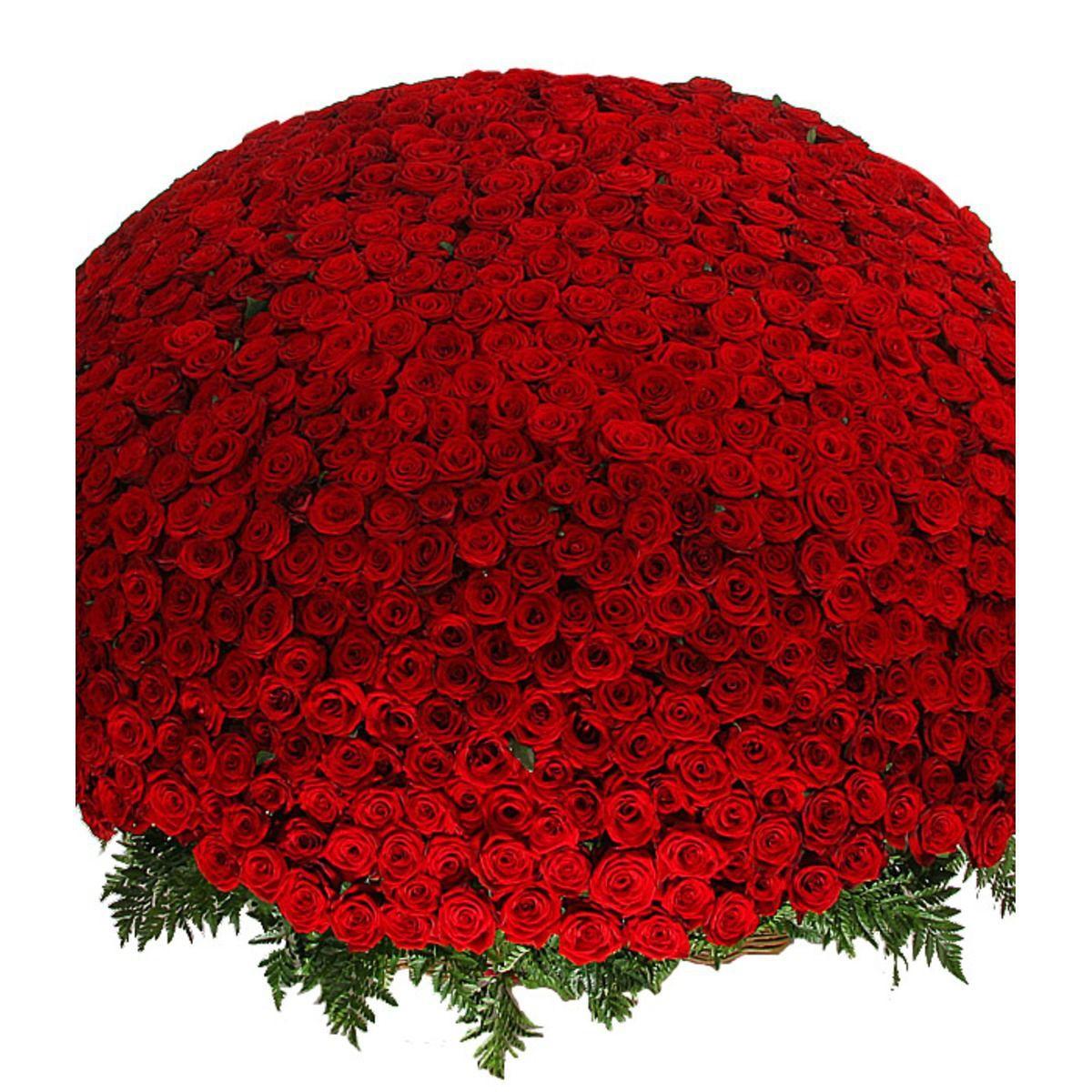желаю льстить, фотографии миллионы алых роз того, будущем планируется