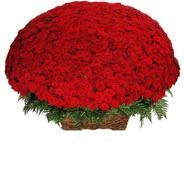 особенность фото огромный букет алых роз сети стали